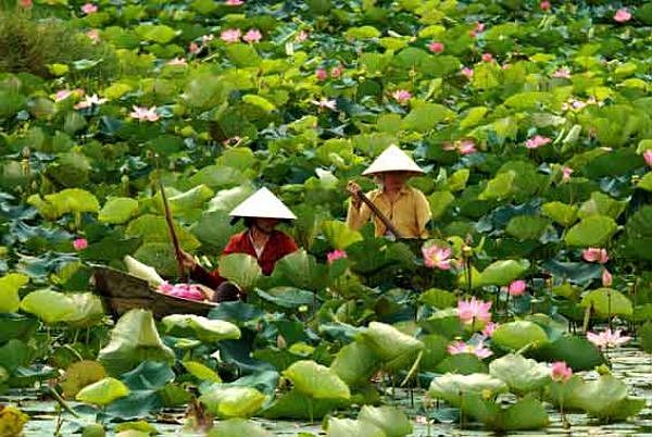Visiting Dong Thap in floating season to see lotus