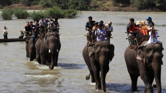 Riding elephants in Don village, Central Highland